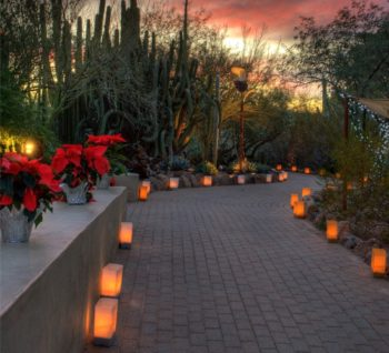 Luminarias in the desert