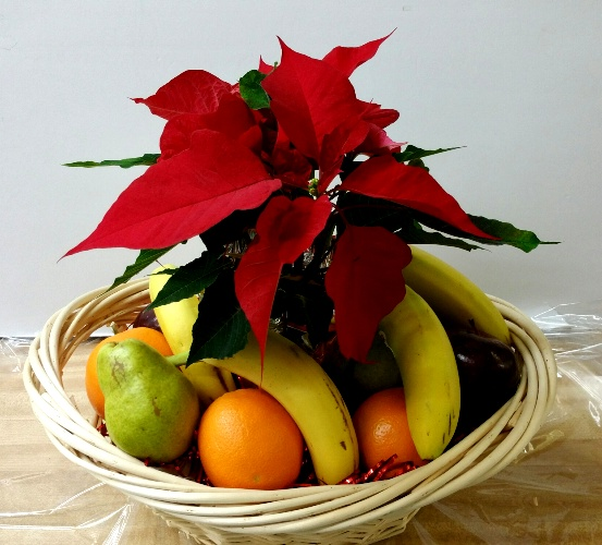 Christmassy Poinsettia and fruit